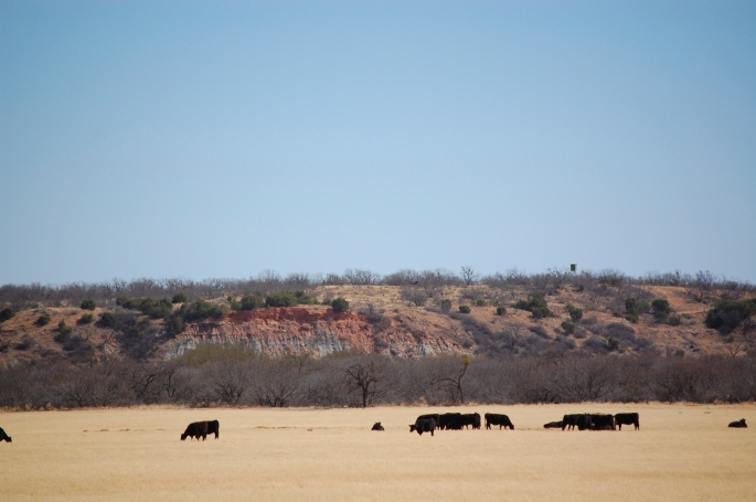 A shot of the Texas landscape