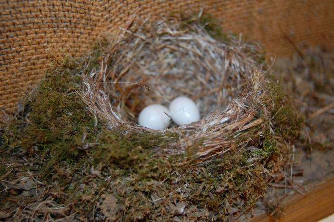 Interesting nest